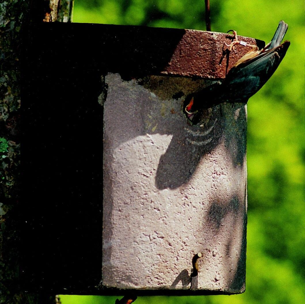 schwegler kleiberh hle 5 kl vogelhaus nistkasten vogelh uschen vogel und naturschutzprodukte. Black Bedroom Furniture Sets. Home Design Ideas
