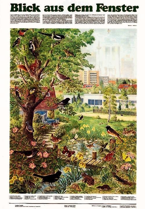 Blick aus dem fenster poster  Poster Naturtafel Blick aus dem Fenster - Vogel- und ...