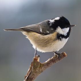 vogelfutterhaus treffpunkt nr 1 f r meisen vogel und naturschutzprodukte einfach online kaufen. Black Bedroom Furniture Sets. Home Design Ideas