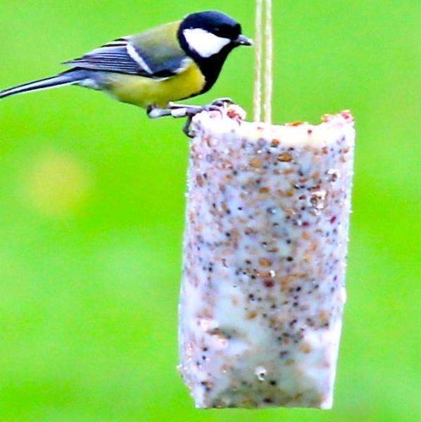 vogelfutter das ganze jahr vogel und naturschutzprodukte einfach online kaufen. Black Bedroom Furniture Sets. Home Design Ideas