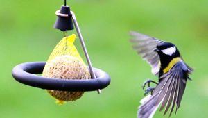 f tterung mit meisenkn del vogeltreff und meisenspa vogel und naturschutzprodukte einfach. Black Bedroom Furniture Sets. Home Design Ideas