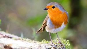 ideales vogelfutter finden vogel und naturschutzprodukte einfach online kaufen. Black Bedroom Furniture Sets. Home Design Ideas