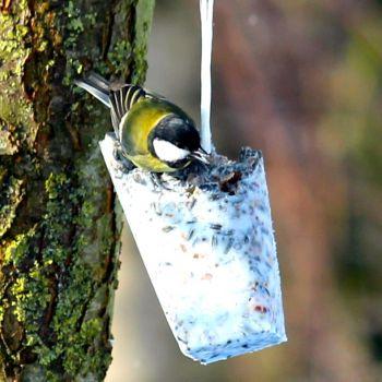 rindertalg 100 rein f r die vogelf tterung vogel und naturschutzprodukte einfach online kaufen. Black Bedroom Furniture Sets. Home Design Ideas