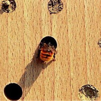 insektenhotels kaufen vogel und naturschutzprodukte einfach online kaufen. Black Bedroom Furniture Sets. Home Design Ideas