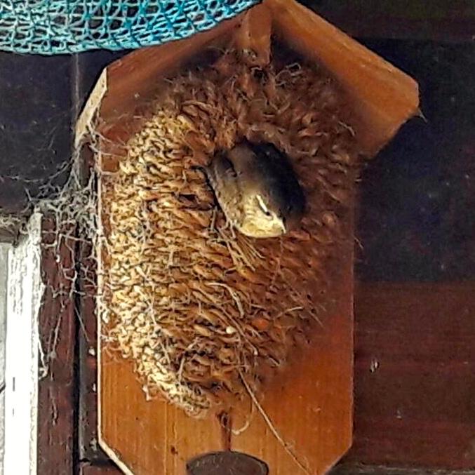 Fotos Unserer Kunden Vogel Und Naturschutzprodukte Einfach Online