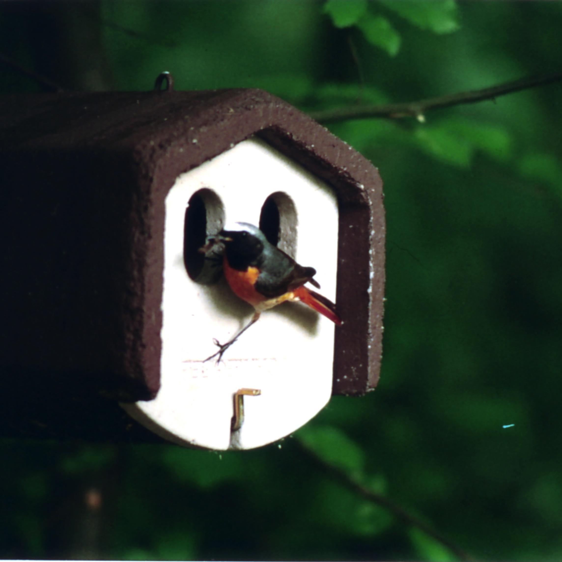 schwegler nischenbr terh hle 1n vogelhaus nistkasten vogelh uschen vogel und. Black Bedroom Furniture Sets. Home Design Ideas