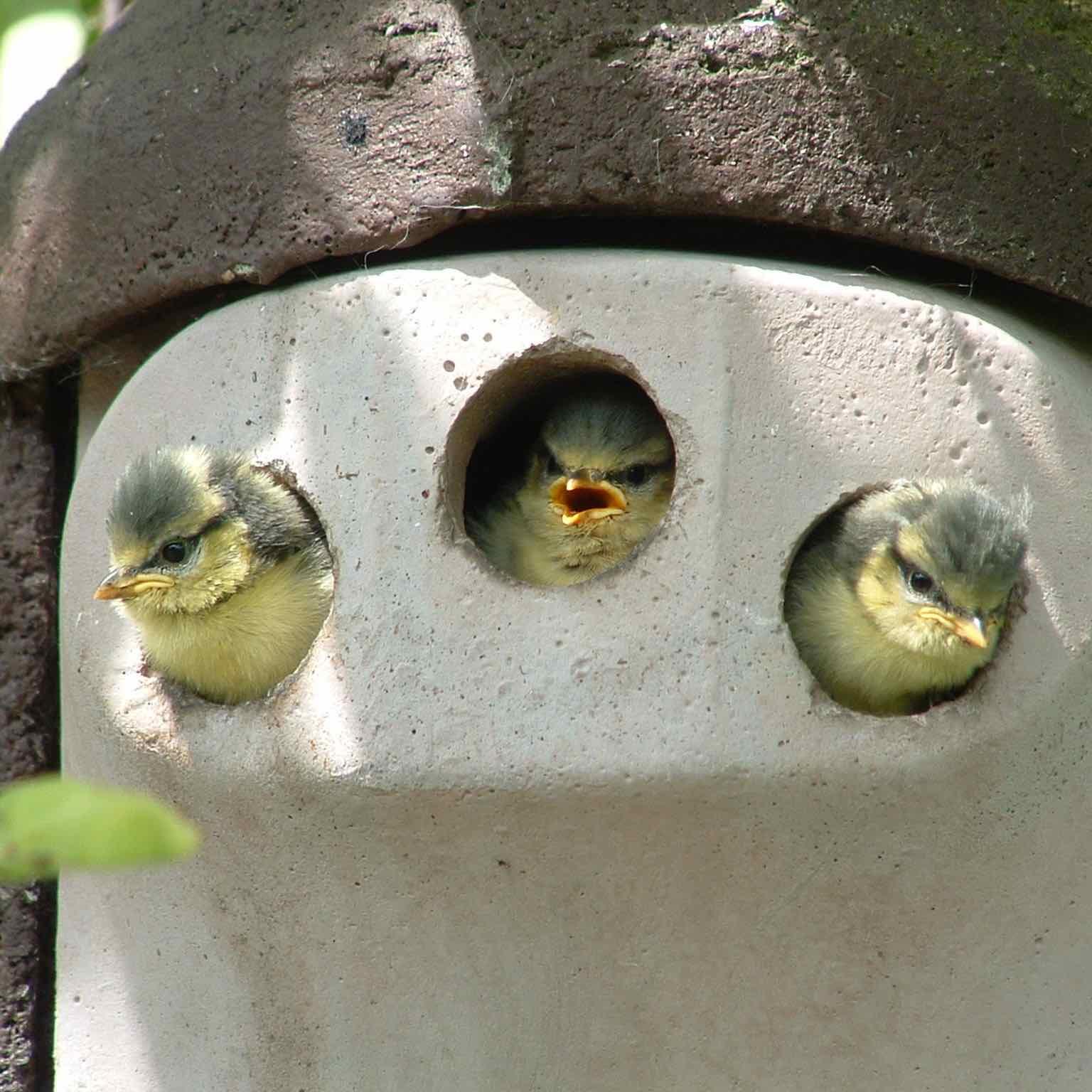 Vogelhaus ausrichten