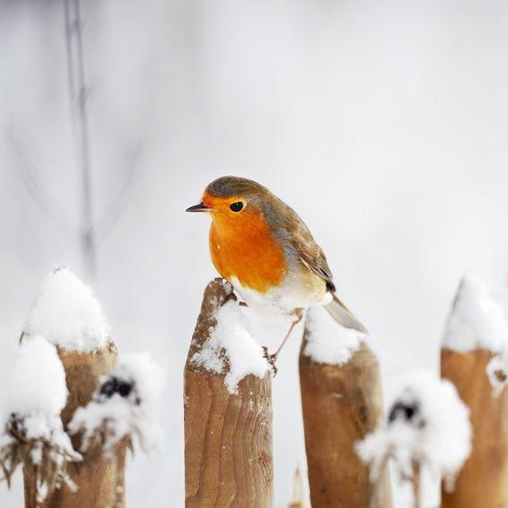 Vogel Im Winter Wintervogel Am Futterplatz Vogel Und
