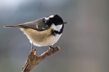 Schwegler Zaunkonig Kugel Vogel Und Naturschutzprodukte Einfach