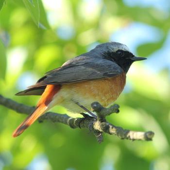vogelfreundlicher garten vogel und naturschutzprodukte einfach online kaufen. Black Bedroom Furniture Sets. Home Design Ideas