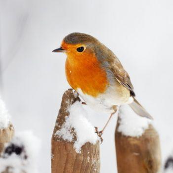 vogelhaus graues haus wildlife garden vogel und. Black Bedroom Furniture Sets. Home Design Ideas