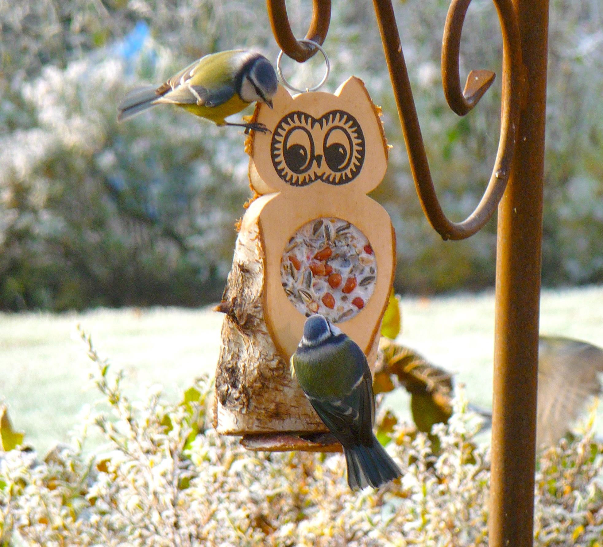 futtereule mit einem futterloch vogel und naturschutzprodukte einfach online kaufen. Black Bedroom Furniture Sets. Home Design Ideas