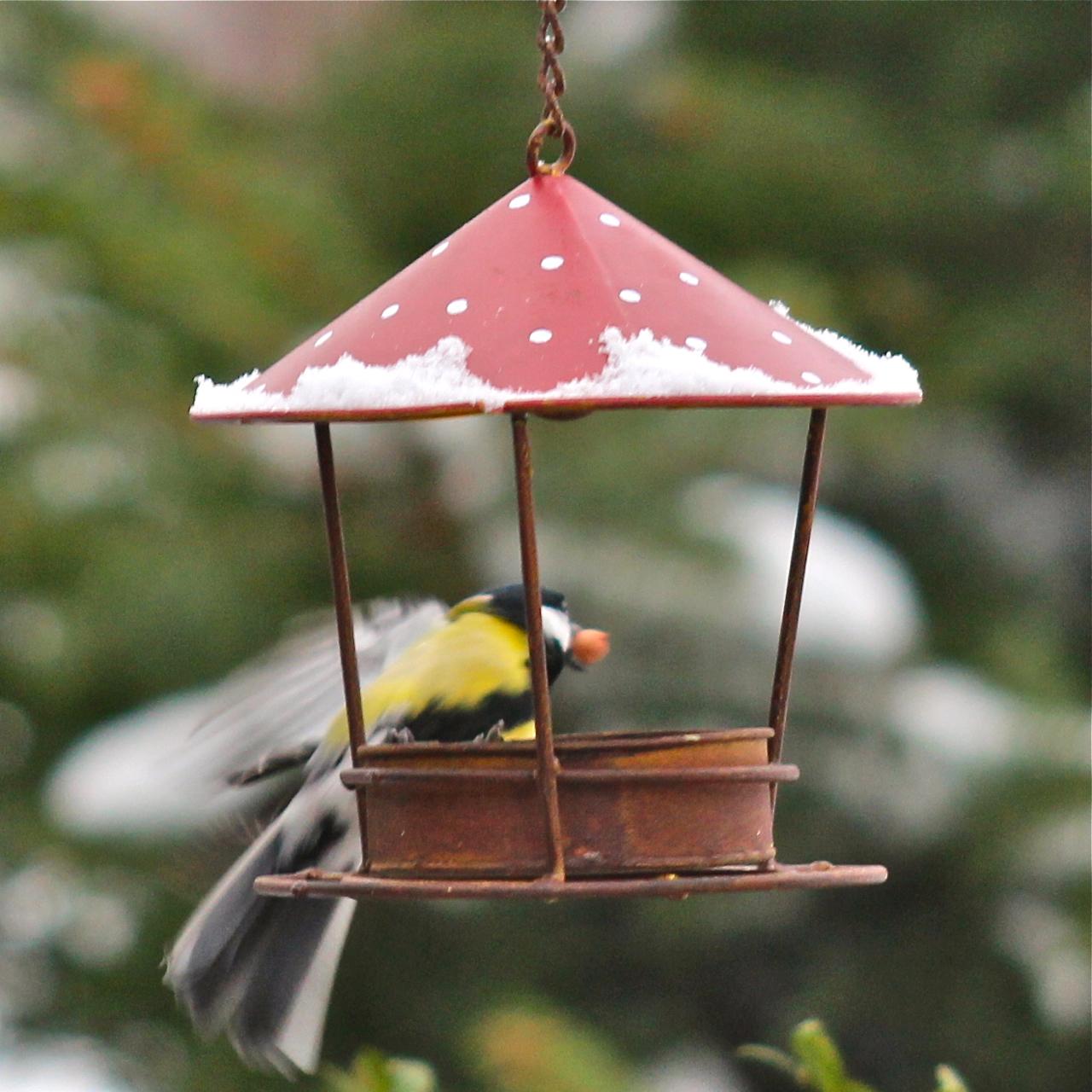 futterh uschen zum h ngen vogel und naturschutzprodukte einfach online kaufen. Black Bedroom Furniture Sets. Home Design Ideas